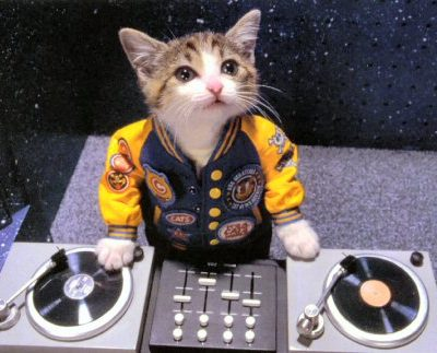 Кот ди-джей